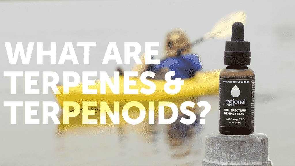 Blog header: What are terpenes & terpenoids? - Rational Hemp